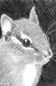 "Chipmunk, 2016. 5"" x 7"" graphite (prints available)"