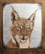 "Lynx, 2017. 8.5"" x 10"" (not including board) graphite & watercolour, mounted on barnboard, framed with maple sapling."