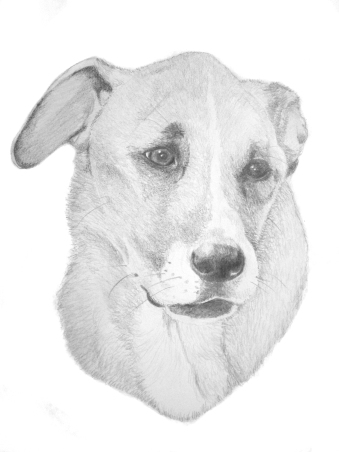 "Otis: (not for sale) 2013 12"" x 18"" graphite (pet portrait commissions available)"